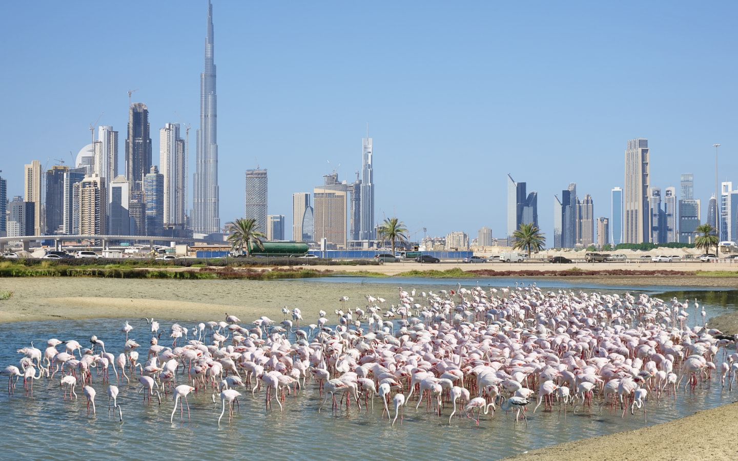 Free Things Anyone Can Do in Dubai to Have a Great Time